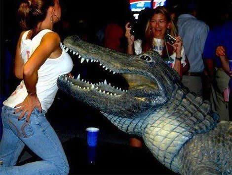 crocodile biting breast