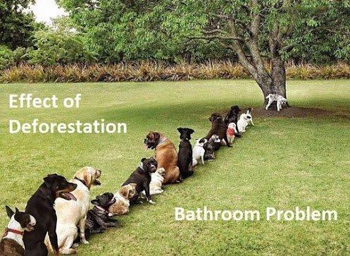 funny-dog-line-tree