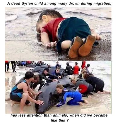 dead syrian child versus a drowning whale