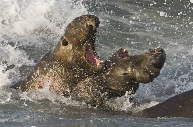 7-display-elephant-seals
