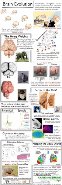 Infographic_BrainEvolution-14hok2o
