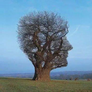 amazing tree2