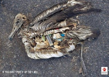 bird dead from garbage
