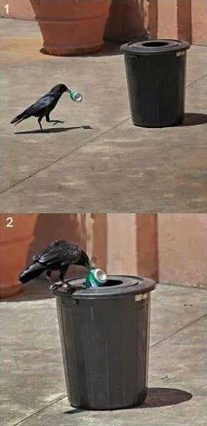 cleaning bird