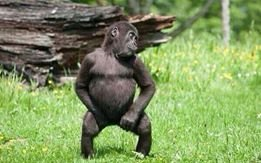 dancing bab