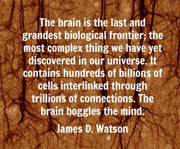 james watson on the human brain