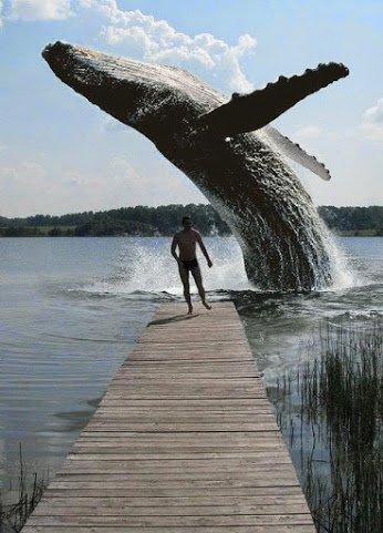 lake whale