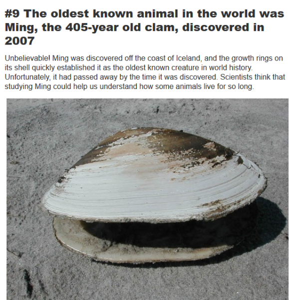 oldest animal was a clam