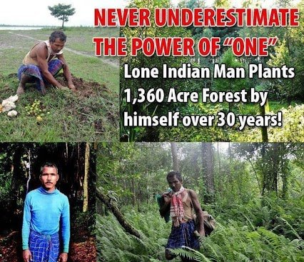one man planted 30acres