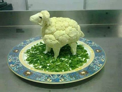 sheep veg