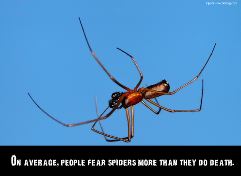 spider - On average people fear spiders more than they do death