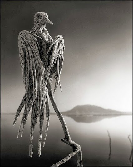 tanzania bird