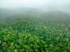 14_southeastern_suriname_forests-new-species-found-in-tropical-rainforest
