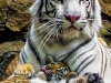 COLOMBIA-ANIMALS-TIGERS-CUBS by LUIS ROBAYO on Getty Images