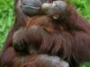 baboon care