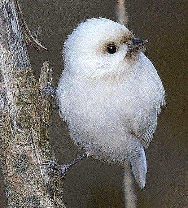 young cue bird