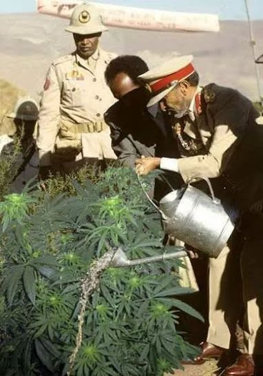 haile sellasie watering marijuana