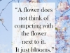 flowers do not compete