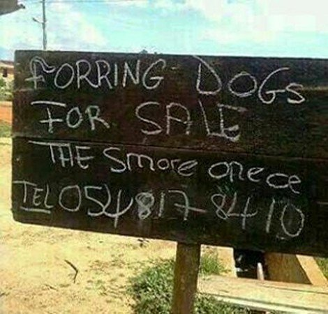forring dogs for sale