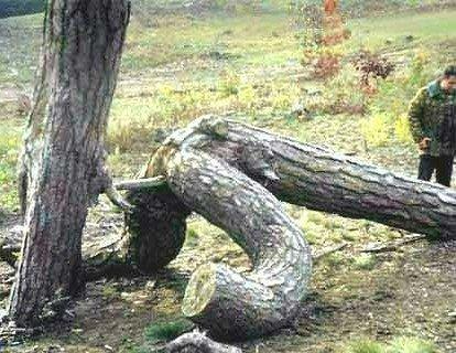 fucking tree