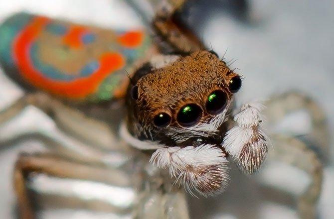 1-display-spider