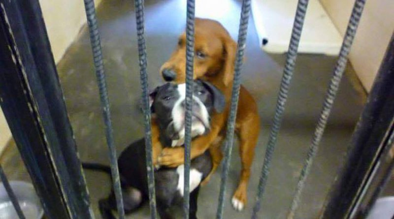 2dogs saved from euthanasia