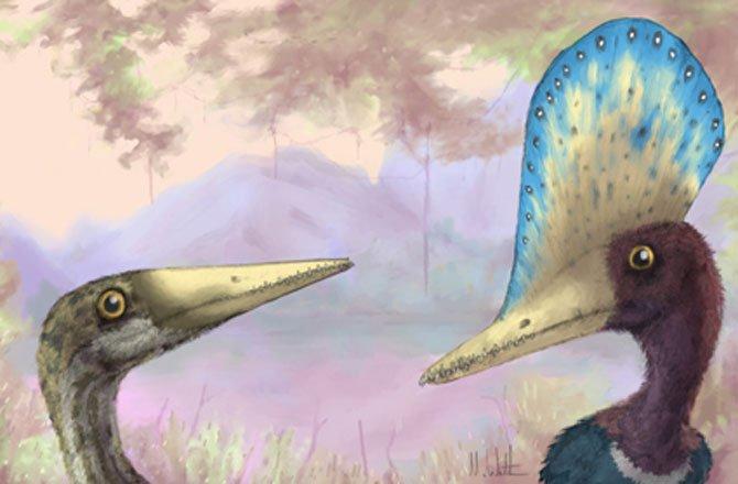4-display-pterosaur2