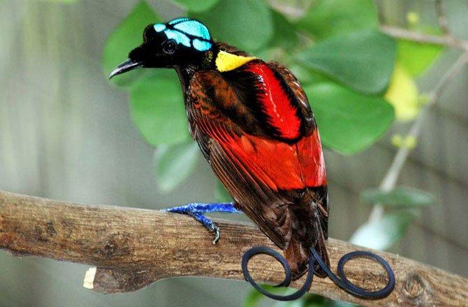 8-display-bird-paradise