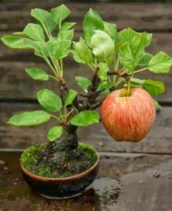 WoW Amazing.! Apple