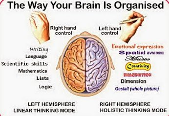 brain-docsity