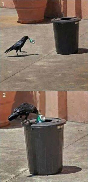 cleaning bird
