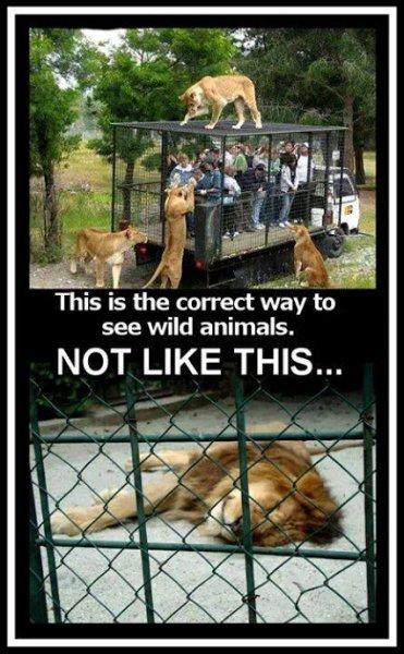 correct way to see wild animal