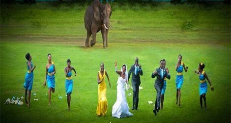 elephant chase