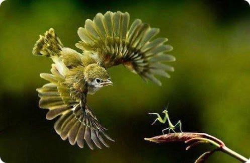 engineered bird
