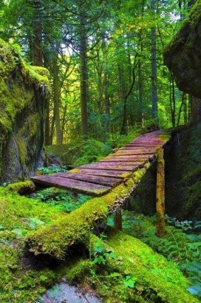 forest bridge british columbia