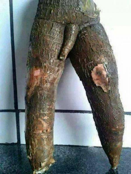 freak cassava