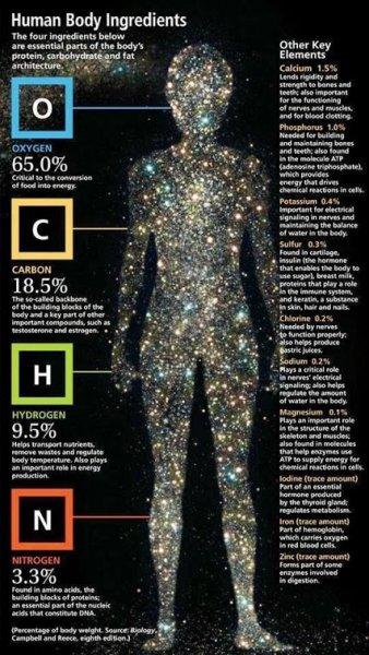 human body ingredients