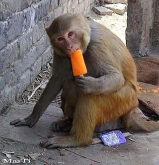 ice cream eating ape