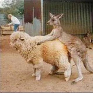 meanwhile_in_australia_640_02