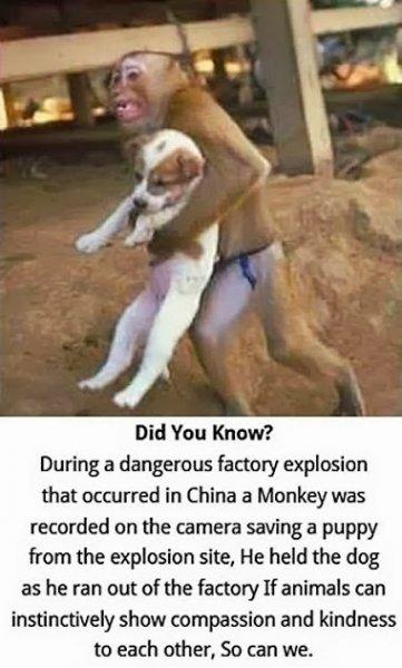 monkey helping a puppy