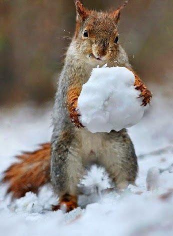 palla di neve