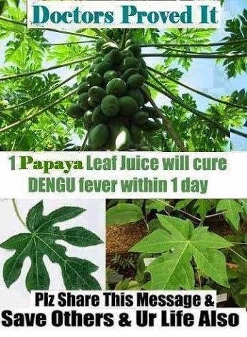 papaya leaves cure denue fever