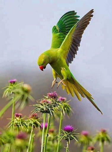 parrot on flower