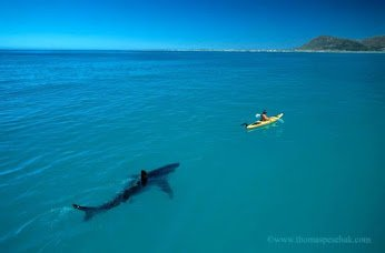 shark and ship