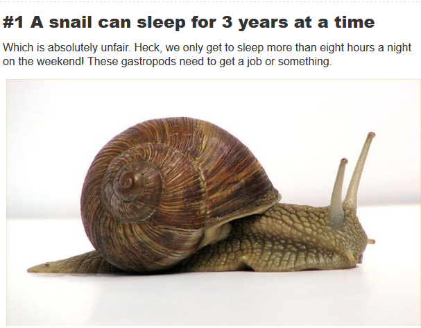 snail can sleep for three years
