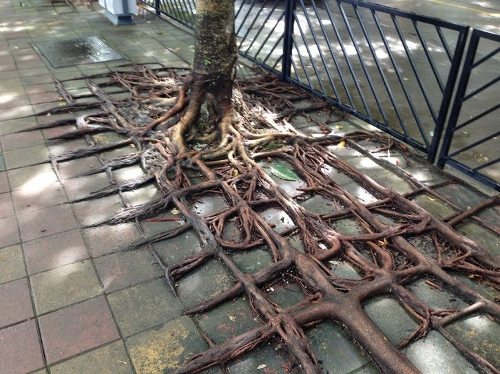 square root2