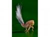 6_planthopper-new-species-found-in-tropical-rainforest