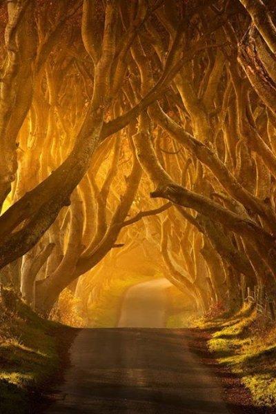 trees in ireland
