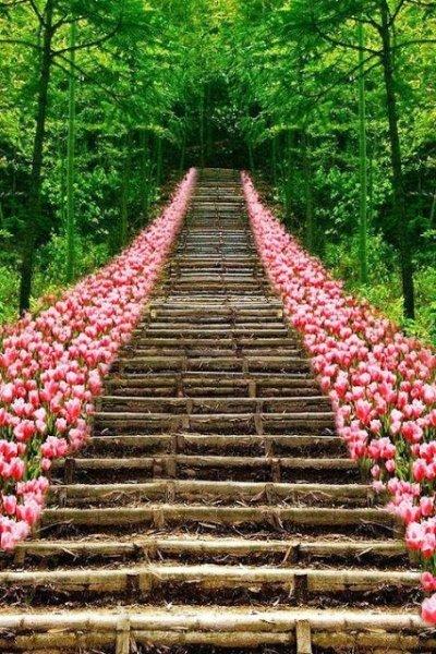 tulid stairs tokyo