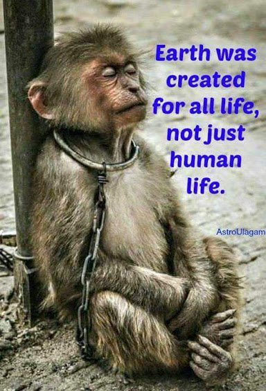 earth was created for all life